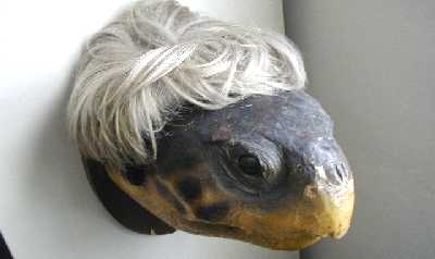 A sea turtle head, in a wig.